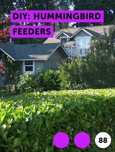 Seed bed preparation, proper planting time and post-planting maintenance are among the keys to successfully growing turf from seed. Fast Growing Vines, Growing Grass, How To Grow Grass, How To Make A Rain Chain, Centipede Grass, Raspberry Bush, Planting Grass, Farm Pond, Growing Raspberries