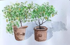 The lemontrees at a holiday house Planter Pots, Illustration, Holiday, House, Vacations, Home, Holidays, Illustrations, Homes
