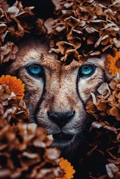 Posters and wall decoration for your interior Poster Junkie - Posters and wall decoration for your interior Poster Junkie - Amazing Animals, Pretty Animals, Majestic Animals, Cute Animals, Beautiful Cats, Animals Beautiful, Animal Posters, Tier Fotos, Jolie Photo