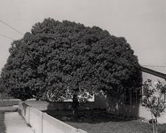 the new west - robert adams Contemporary Photography, Monochrome Photography, Street Photography, New West, Great Books, Outdoor, Trees, Inspire, Artists