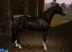 shine marking - by Victoria de Irujo on Equus-Sims