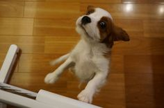 """Cavalier, """"I can't wait"""""""