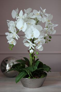 Three Stunning Orchid Decorations For Weddings – Bridezilla Flowers Potted Orchid Centerpiece, Orchid Flower Arrangements, Amazing Flowers, Beautiful Flowers, Orquideas Cymbidium, Artificial Orchids, Dendrobium Orchids, Orchids Garden, Indoor Flowers