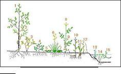 Apuntes practicos de Flora y vegetacion aplicados en la R.N Rio Clarillo. RM Chile   Maria Serra y Vilalta - Academia.edu