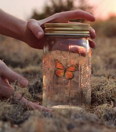 butterfly in a jar (they move every once in a while or when you tick it)