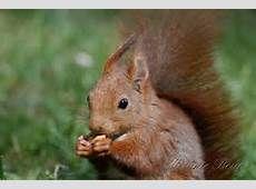Chipmunks, Squirrels, Kawaii, Image, Gatos, Animaux, Animal Pictures, Animals, Kawaii Cute