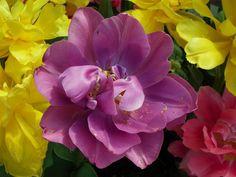 Purple Flower By Kristine Euler