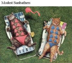 Modest Sunbathers! #cats #summer is over