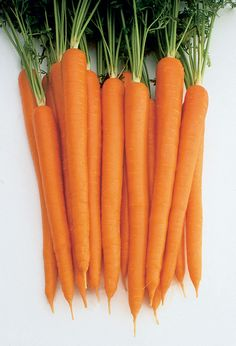 Relative Maturity: Midseason Shape: Tapered Size: Interior: Dark Orange Characteristics: Dark orange, tapered roots are sweet and tender, smooth, and uniform. Medium-tall tops are strong. Planting Vegetables, Fruits And Vegetables, Vegetable Gardening, Hydroponic Gardening, Organic Gardening, Carrot Varieties, How To Plant Carrots, Food Wallpaper, Galaxy Wallpaper