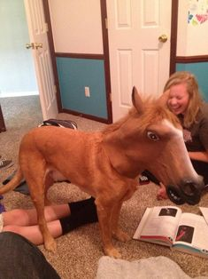 So I put my horse mask on my dog. The girl dying-laughing adds to how hilarious this is! I want a horse mask :D Horse Mask, My Horse, Horse Head, Funny Animal Pictures, Funny Animals, Cute Animals, Funny Photos, Lol Pictures, Funny Pictures Of People