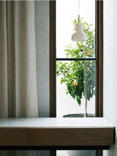 lemon tree windows