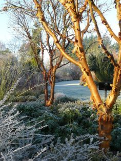 A winter view at Sir Harold Hillier Gardens