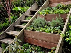 Wooden Outdoor Stairs and Landscaping Steps on Slope, Natural Landscaping Ideas Retaining wall herb garden on a steep slope next to a stair case. We need something like this in our back yard. Sloped Garden, Sloped Backyard Landscaping, Plants, Backyard Landscaping, Small Space Gardening, Herb Garden Wall, Garden Containers, Natural Landscaping, Hillside Landscaping