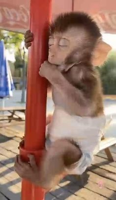 Cute Wild Animals, Baby Animals Super Cute, Cute Little Animals, Cute Funny Animals, Animals Beautiful, Animals And Pets, Funny Monkeys, Cute Animal Videos, Funny Animal Pictures