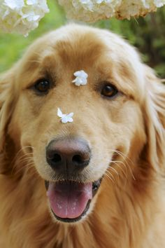 Flower petals on its sweet nose.