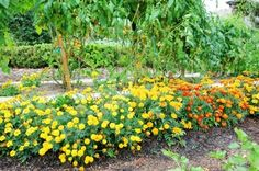 28 Companion Planting Combinations To Grow The Tastiest, Most Bountiful Food & Beautiful Flowers