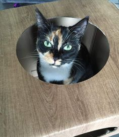 Oh wow! Coco is so beautiful   we are so happy you both like it   #cat #catsofinstagram #catstagram #catsagram #cats_of_instagram #catfurnature #catfurniture #catsinboxes #cattoy #INSTACAT_MEOWS #cutecat #PurrMachine #catsinboxes #catbox #Excellent_Cats #BestMeow #dailykittymail #thecatniptimes #catcube #catpod #ArchNemesis #FlyingArchNemesis #myindoorpaws #ififitsisits #cutecatcrew #catchalet #catnip #themeowdaily #kitty #catpyramid #pyramid