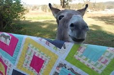 Donkey's wearing boots fabric haha http://lauriewis.blogspot.com/2010/06/donkey-giveaway-winners.html