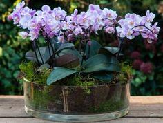 Мини-орхидеи выгодно отличаются от привычных для многих цветоводов стандартных комнатных орхидей не только параметрами длины цветоноса, но и размерами цветка. Основных видов миниатюрных комнатных орхи...