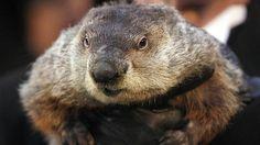 Iarna va dura inca sase saptamani in Statele Unite ale Americii a anuntat duminica marmota Phil din Punxsutawney (o mica localitate din statul Pennsylvania), ale carei previziuni meteorologice se baze