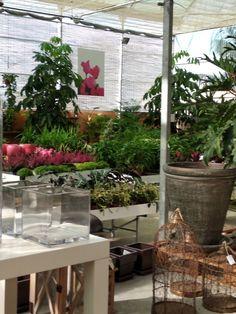 Garden Centre, Ladder Decor, Plants, Home Decor, Fotografia, Decoration Home, Room Decor, Plant, Home Interior Design