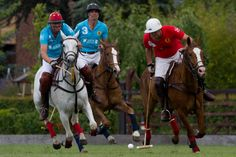 Polo sport | Horses | riding | Netherlands | Europe