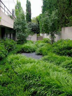 Hakonechloa macra. Jardín Aravaca.  Paisajismo Miguel Urquijo www.urquijokastner.com