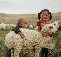 Sheep hugs