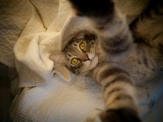 20 Funny Felines Taking Cat Selfies (shared via SlingPic) Selfie Gato, Cute Cats, Funny Cats, Funny Animals, Cute Animals, Crazy Animals, Animal Memes, Taking Cat, Photo Chat