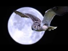 Night Owl Moon Wallpaper in Owl Wallpaper, Wallpaper Pictures, Wings Wallpaper, Beautiful Owl, Animals Beautiful, Stunningly Beautiful, Nicolas Vanier, Owl Moon, Twisted Tree
