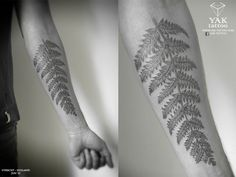 fern arm tattoo - Google Search