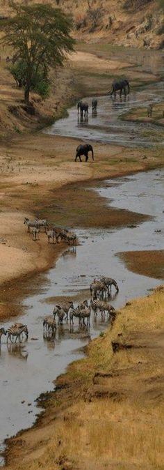 Mistral Tarangire National Park, Tanzania                                                                                                                                                                                 More