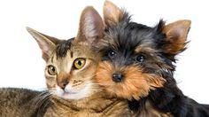 Perro vs. gato: ¿cuál es la mejor mascota?