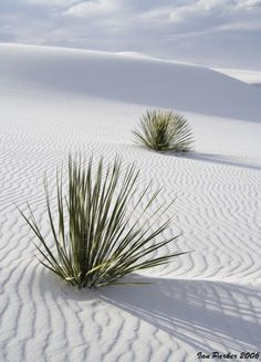 White Sands, New Mexico. I've been here! My little brother peed in the sand.