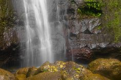 Slated Slush   manoa falls, manoa, oahu, hawaii by El Justy, via Flickr