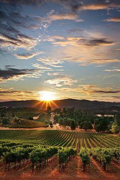 Preciosa puesta de sol sobre los viñedos de California