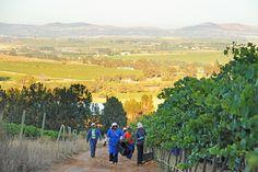 #Stellenbosch #View Farm Life, Vineyard, Outdoor, Inspiration, Image, Outdoors, Biblical Inspiration, Outdoor Games, Outdoor Living