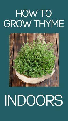 Growing Herbs In Pots, Growing Plants Indoors, Herbs Indoors, Garden Yard Ideas, Patio Ideas, Container Gardening, Herb Gardening, Indoor Gardening, Indoor Plants