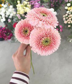 _ 거베라가 이렇게 예쁘기있음^^? 한눈에뿅 #퐁퐁거베라 . . #이천꽃집 #이천플라워샵 #꽃피는봄날 #플라워클래스 #원데이클래스 #꽃 #꽃바구니 #꽃다발 #flowerbasket #handtied #flowerclass #이천꽃배달 #드라이리스 #센터피스