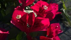 Flores em Três Rios - RJ