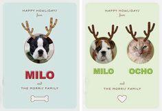 Pet Photography #pets #photography
