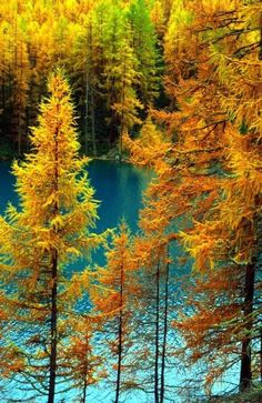 Beautiful Pictures Amazing World is Earth laughs in flowers. Nature does not hurry, yet everything is accomplished Beautiful World, Beautiful Images, Simply Beautiful, Autumn Scenes, Seasons Of The Year, Fall Pictures, Belle Photo, Nature Photos, Beautiful Landscapes