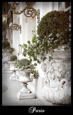 Ivy filled urns in Paris, France