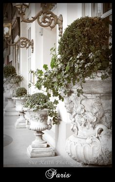 Ivy filled urns in Paris, France
