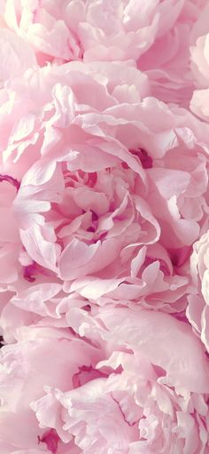 Peonies wallpaper for your iPhone 6 Plus from Everpix app! Peonies wallpaper for your iPhone 6 Plus from Everpix app! Peonies Wallpaper, Pink Wallpaper Iphone, Colorful Wallpaper, Trendy Wallpaper, Pink Flower Wallpaper, Pink Iphone, Iphone Backgrounds, Nature Wallpaper, Mobile Wallpaper