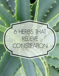 6 Herbs For Constipation Relief
