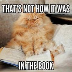17 Truths Only Book Lovers Will Understand Funny Animal Pictures, Funny Animals, Cute Animals, Funny Images, Funny Dogs, Book Of Life, The Book, Angry Cat, Book Memes