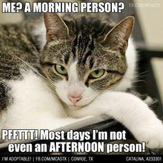 Check back around 5pm-ish. #mcaspets #cats