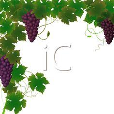 iCLIPART - Royalty Free Clipart Image of a Border of a Grape Vine and Grapes