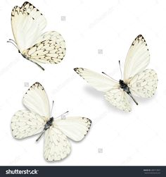 Three White Butterfly, Isolated On White Background Стоковые фотографии 280717847 : Shutterstock
